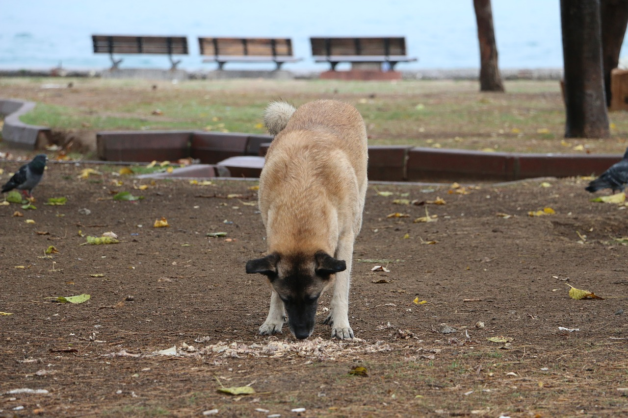 Strange dog behavior - Coprophagia in dogs - when your dog eats their own faeces or stool